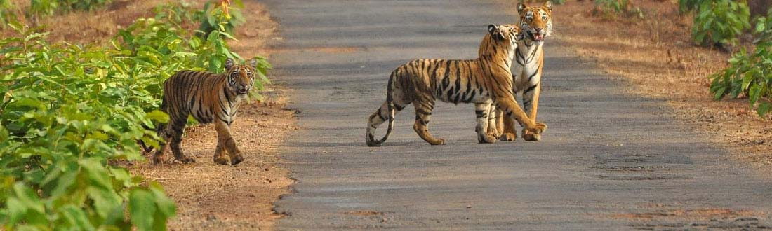 Odisha Wildlife Tour Packages and special deals for Tourist