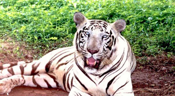 Similipal Wildlife Tours