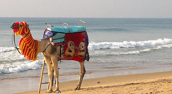 Golden Triangles with Puri Tour Package