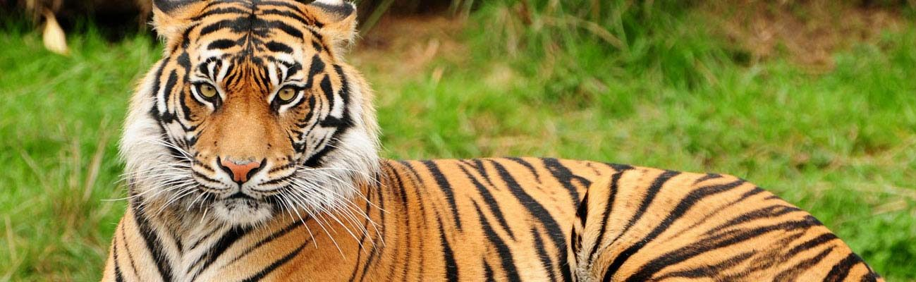 Wildlife Tour Odisha