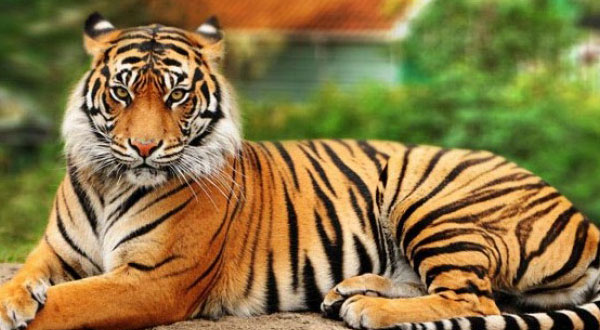 Wildlife Tours Packages Odisha