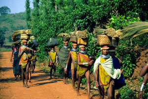 Tribal Tours in Odisha - Tribal Tour Packages in Odisha - Tribes in